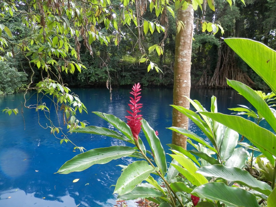Flowers at Matevulu Blue Hole