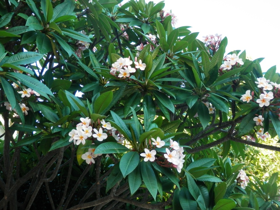 More fragrant flowers